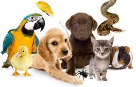 """Круглий стіл 7 квітня """"Проблеми імплементації міжнародних і регіональних стандартів захисту тварин в національне законодавство"""""""